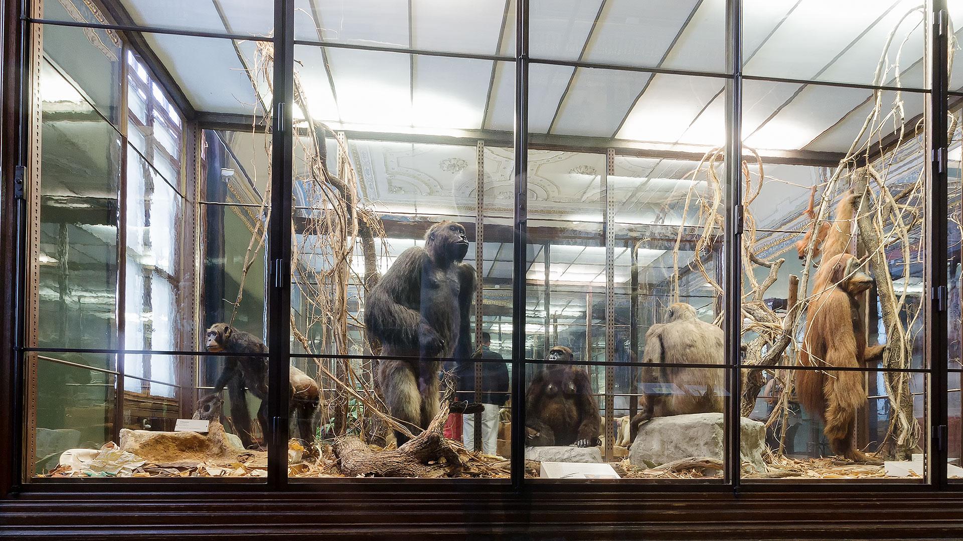naturhistorisches-museum