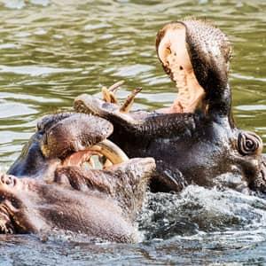 wien-top-10-zoo-vienna