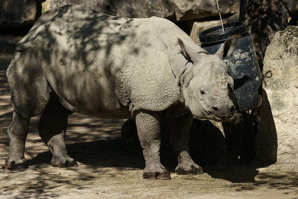 zoo-wien (36)