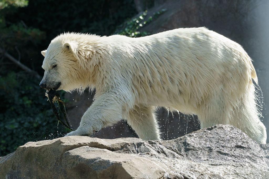 zoo-wien (42)