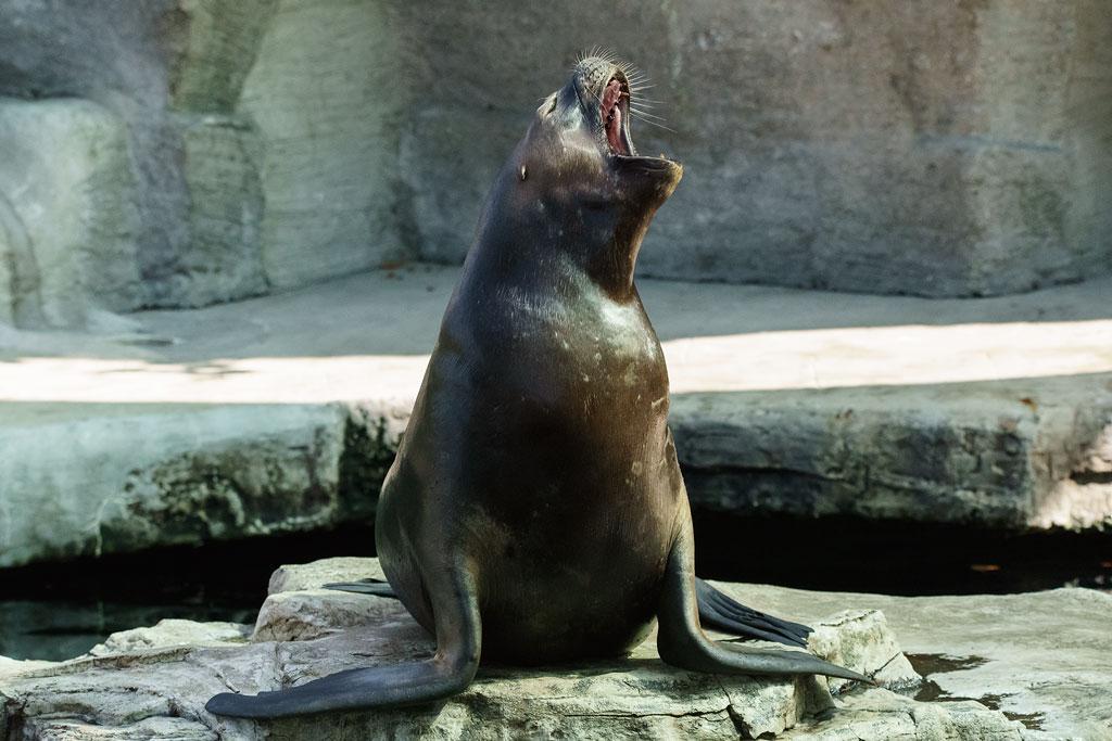 zoo-wien (43)