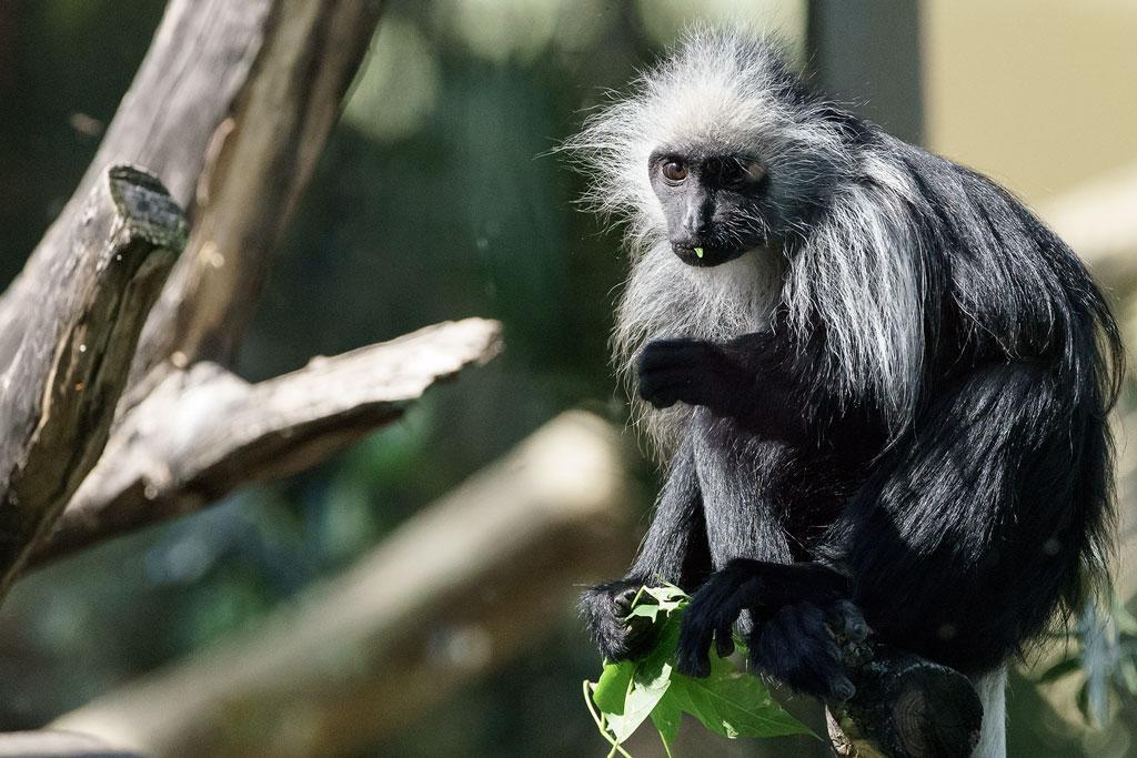 zoo-wien (46)