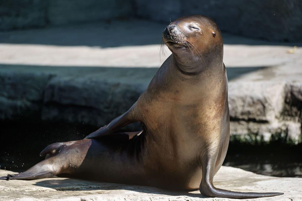 zoo-wien (48)